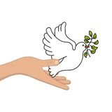 Peace dove with olive branch Royalty Free Stock Images