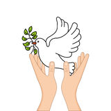 Peace dove with olive branch Royalty Free Stock Photos