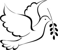 Peace dove. Vector sketch of a graceful flying dove Royalty Free Stock Images