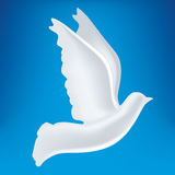 Peace dove white (vector) Royalty Free Stock Photo