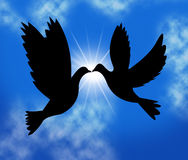 Peace Doves Indicates Flock Of Birds And Wildlife Royalty Free Stock Image