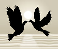 Peace Doves Shows Flock Of Birds And Wildlife Stock Photo