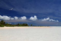 Wild Palm Beach, bird and puffy clouds. Wild tropical beach. Christmas Island, Kiribati Stock Photography