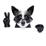 Peace fingers dog Stock Photography