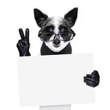 Peace fingers dog Stock Photo
