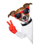 Peace fingers dog Stock Image