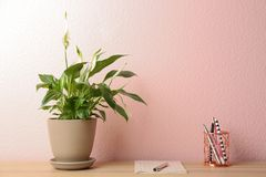 Peace lily, notebook and pens on table against color wall. Space for text royalty free stock photos