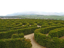 Peace Maze 01. The Peace Maze, the largest hedge maze in the world, in Northern Ireland Stock Image