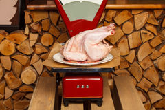 Peace of meat on red scales Royalty Free Stock Image