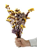 Peace offering - man with dried flowers over white Royalty Free Stock Images