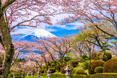 Peace Park and Mt. Fuji in Spring royalty free stock images