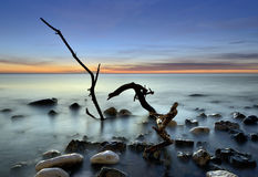 Peace. Quiet morning on the beach at an old tree trunk Stock Image