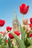 Peace Tower of Parliament building in Ottawa Royalty Free Stock Images