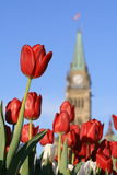 Peace Tower - Red Tulip Royalty Free Stock Images