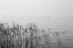 Peace and tranquility of the lake Royalty Free Stock Photo