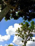 Peace. Trees and blue sky symbolize peace royalty free stock photo