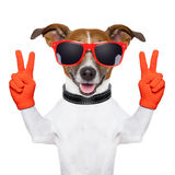 Peace and victory fingers dog Stock Photography
