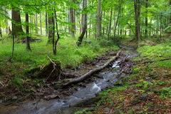 Peacefuk forest stream flow down among stones Stock Image