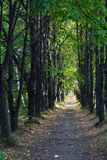 Peaceful alley in august. Peaceful green linden alley in august Royalty Free Stock Photos