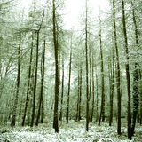 peaceful alpine forest covered in snow, Stock Images