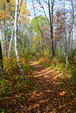 Peaceful autumn forest trail landscape Royalty Free Stock Photography