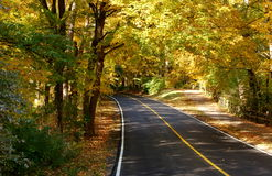 Peaceful autumn lane Royalty Free Stock Image