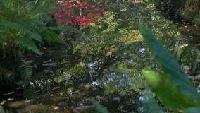 Peaceful Autumn Park Pond Reflection stock footage