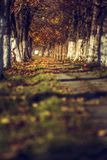 Peaceful autumn Stock Images