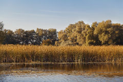 Peaceful autumnal landscape with water, reed and trees Stock Image