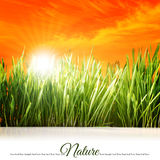 Peaceful background with grass Stock Photos