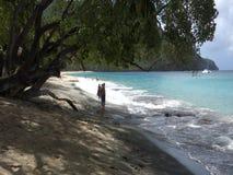 A peaceful beach in the caribbean stock video