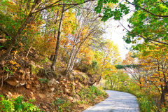 The peaceful bend path _ autumnal scenery Stock Photos
