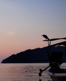 Peaceful. The bird is on the boat starting to feed in the morning Royalty Free Stock Photos
