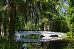Peaceful bridge in Southern Swamp with Spanish Moss stock images
