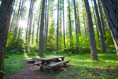 Peaceful campground or picnic spot. Campground or picnic site. Lush green forest. Quiet and peaceful. Table Stock Photo