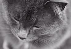 Peaceful cat Stock Photos