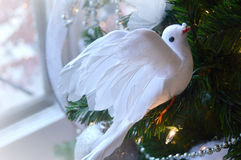 Peaceful Christmas Dove stock images