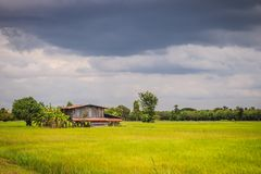 A peaceful cottage on green rice farm with dark stormy sky backg Royalty Free Stock Image