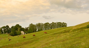 Peaceful country landscape Stock Images