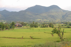Peaceful Countryside House. House among Rice Fields by Mountains Royalty Free Stock Photography