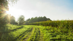 Peaceful countryside in sunlight Stock Images
