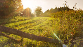 Peaceful countryside in sunlight Royalty Free Stock Photo
