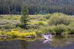 Peaceful still creek lowland near forest stock photography