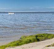 Peaceful day at the bay with a gray boat on the calm sea water. Pine trees in the background lead  the sight at  a peaceful bay with a colorful fishing Stock Photography