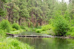 Peaceful Deschutes River Royalty Free Stock Images