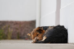 Peaceful dog sleep stock images