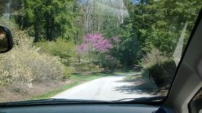 Peaceful drive in the park during spring Royalty Free Stock Photos