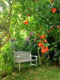 Peaceful empty bench under pomegranate trees Stock Photos