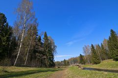 Peaceful European Spring Forest Landscape Royalty Free Stock Photos