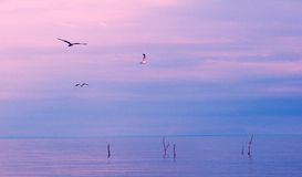 Peaceful evening. Birds flying over a lake at sunset stock images